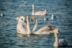 Birds of the sea Stock Photos