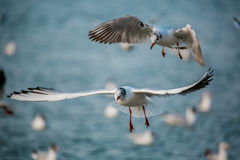 Birds of the sea stock image