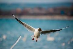 Birds of the sea Royalty Free Stock Photo