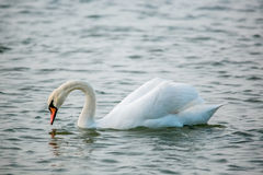 Birds of the sea Royalty Free Stock Images