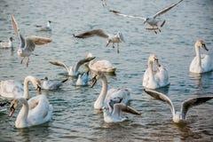 Birds of the sea Royalty Free Stock Photos