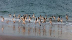Birds at the sea. In the wild Royalty Free Stock Photos