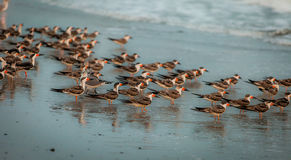 Birds at the sea. In the wild Royalty Free Stock Images