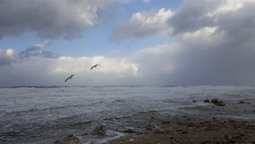 Birds seagulls above stormy sea. Birds seagulls flying above stormy windy Mediterranean Sea in Haifa Israel with foam and waves, overcast winter weather, clouds Royalty Free Stock Image