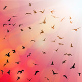 Birds, seagulls black silhouette on pink Royalty Free Stock Photo