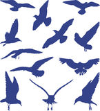 Birds, seagulls in blue silhouettes, vector. Silhouettes of seagulls flying on the white background, vector illustration Royalty Free Stock Photography