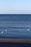 Birds seagulls on the sea Stock Photos