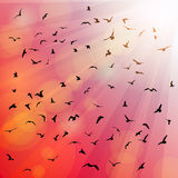Birds, seagulls silhouette in the rays on pink Royalty Free Stock Images