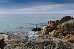 Birds Searching for food. Birds in coastline searching for food Royalty Free Stock Images