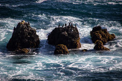 Birds on seastacks on the Pacific Ocean Royalty Free Stock Image