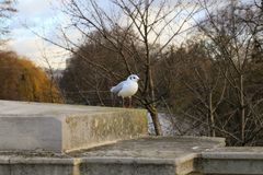 Birds seating on a fence by the river. In London Royalty Free Stock Image