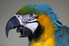 Birds seen in Kuala Lumpur Bird Park Royalty Free Stock Images