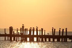 Montauk Travel. Birds are seen at sunset on a dock in Montauk, NY Royalty Free Stock Photography