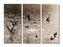 Birds in sepia. Birds over the water in sepia. Divided for three. Even Steven. With shadow Royalty Free Stock Photo