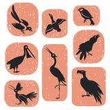 Birds set. Cartoons set of several wild birds Stock Photography