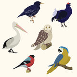 Birds set. Flat style Vector illustration Stock Image