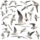 Birds set isolated Royalty Free Stock Photo