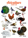 Birds set. Set of poultry. Aviculture. Stock Photo