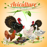 Birds set. Set of poultry. Aviculture. Vector illustration Royalty Free Stock Photos
