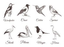 Birds set sketch. Collection of birds. Hand drawing vector illustration for design stock illustration
