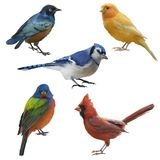 Birds set watercolor painting. Isolated on white background royalty free stock photo
