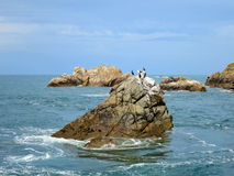 Birds at Seven islands, Brittany, France Stock Photo