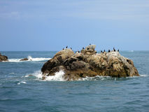 Birds at Seven islands, Brittany, France Royalty Free Stock Photos