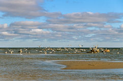 Birds on the shallow. Stock Images
