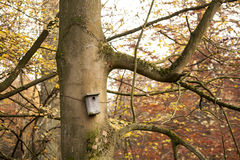 Birds shelter in a tree Royalty Free Stock Images