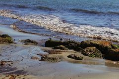 Birds on the shore in the morning.  Stock Photos