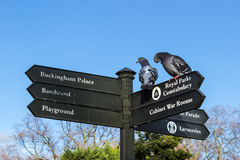 Birds on sign post at the park Stock Images