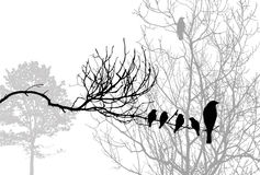 Birds silhouette Stock Photo