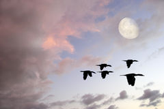 Free Birds Silhouette Royalty Free Stock Photography - 68549447