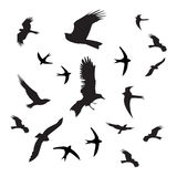 Birds silhouette black on white background Stock Image