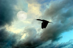 Birds Silhouette Flying Stock Images