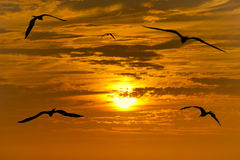 Birds Silhouette Flying Royalty Free Stock Photo