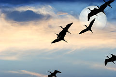 Birds Silhouette Moon Royalty Free Stock Photo