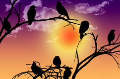 Birds silhouette sitting on a branch at sunset Royalty Free Stock Photo