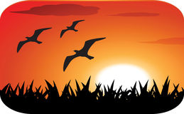 Birds silhouette with sunset Stock Image