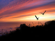 Birds Silhouette Sunset Stock Images