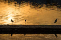 Birds silhouette during sunset Stock Photos