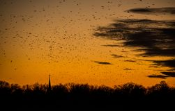 Birds silhouette in the sunset over Bucharest sky. In summer time , Romania Royalty Free Stock Photography