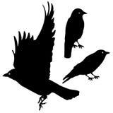 Birds Silhouette template set. plus EPS10 Royalty Free Stock Photo