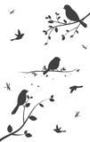 Birds silhouette with tree and birdcage Royalty Free Stock Photo