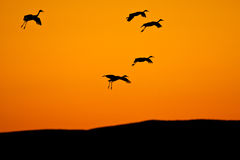 Birds Silhouetted Against Sky Stock Photos