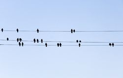 Birds silhouettes. Like music notes Stock Images