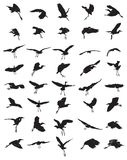Birds silhouettes Royalty Free Stock Photos