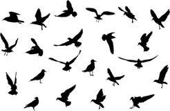 Birds silhouettes. Black silhouettes if birds on white background stock illustration