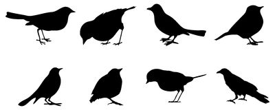 Birds silhouettes. Different kinds of birds isolated on white background Royalty Free Stock Image