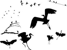Birds Silhouettes Royalty Free Stock Photo